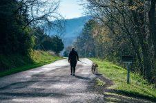 Promenad med hund